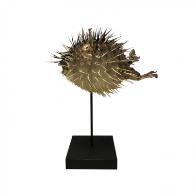 Porcupine Fish op voet